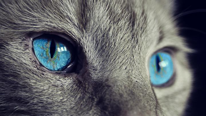 Cat 1285634 960 720 Pixabay